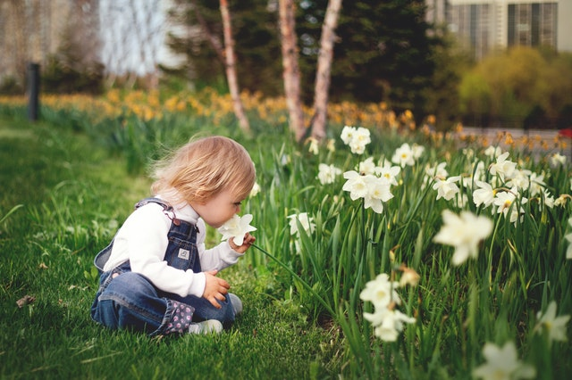 When Should You Plant Daffodils